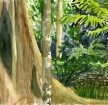 rainforest1 thumbnail